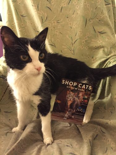 shop-cats-of-new-york