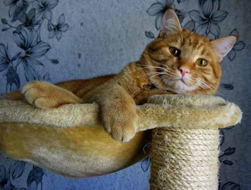 orange-cat-cat-tree