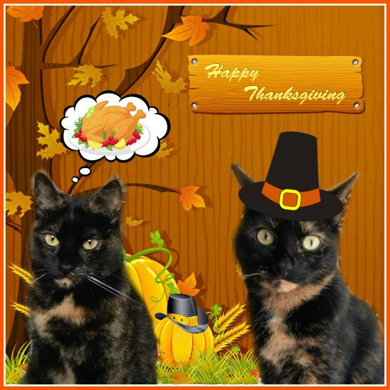 thanksgiving-cats