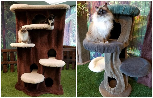 kitty-cat-condos