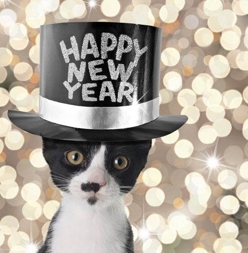 happy-new-year-cat