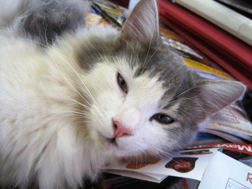 senior-cats
