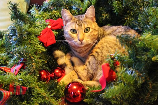 christmas-cat-photos