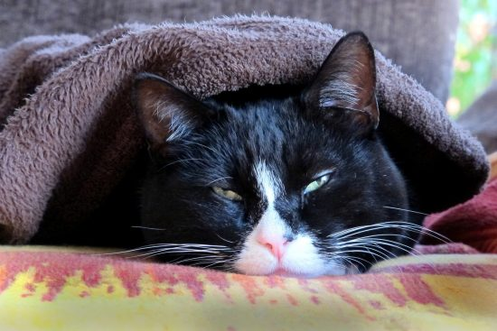 Cats Get Colds From Humans