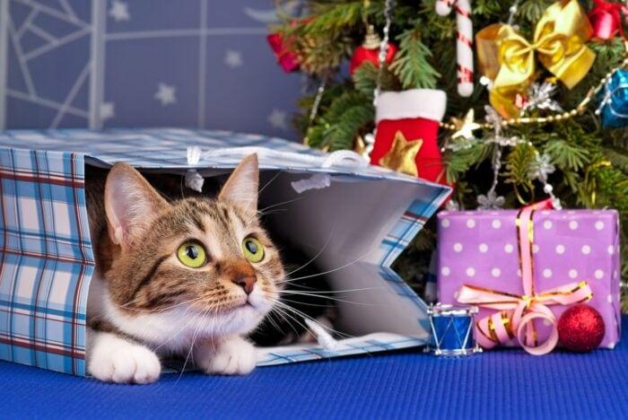 cat-christmas-tree