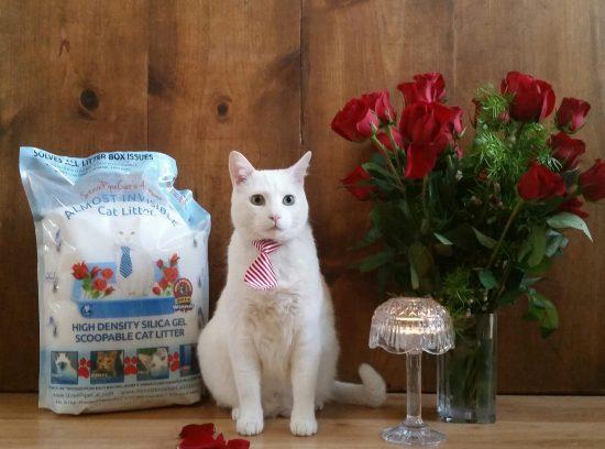 white-cat-roses