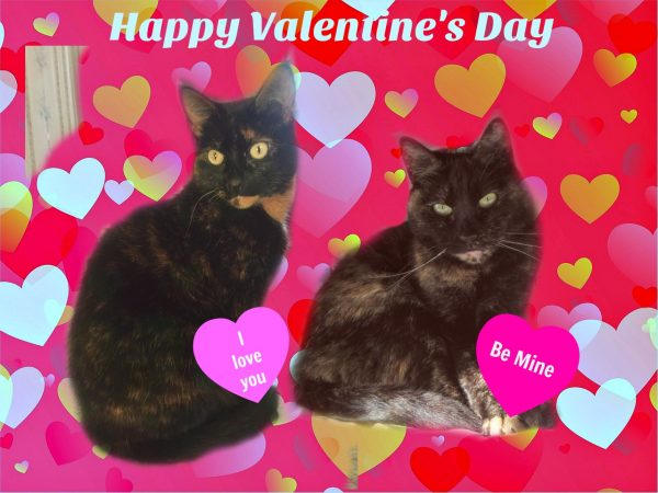 Image result for happy valentines day cats
