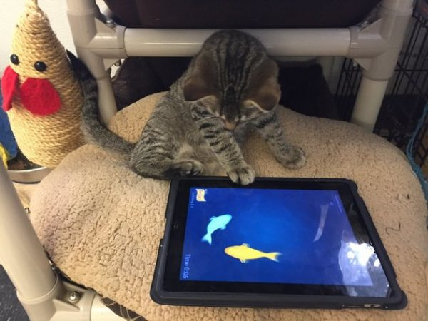 shelter-cats-ipad