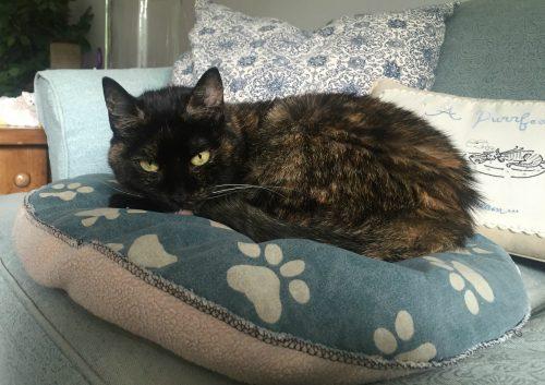 cat-on-pillow