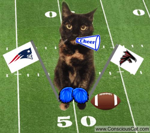 cat-football