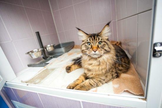 cat-hospitalized