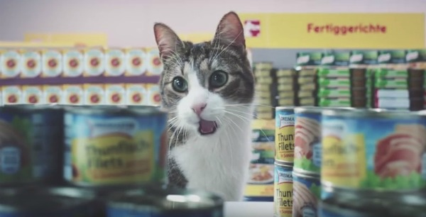 Netto-cat-commercial