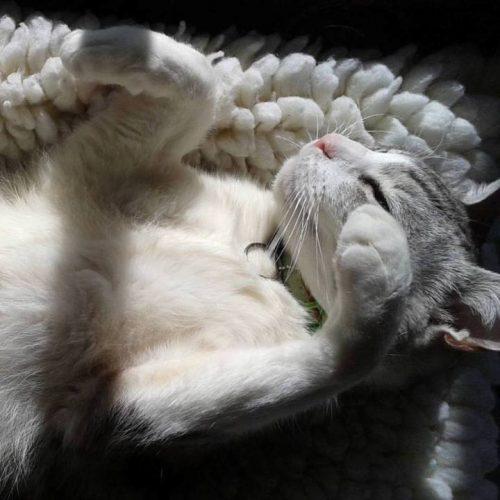cat-lounging-sun