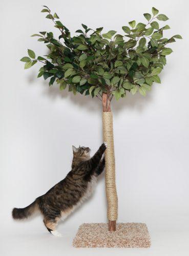 Scratchng_Tree