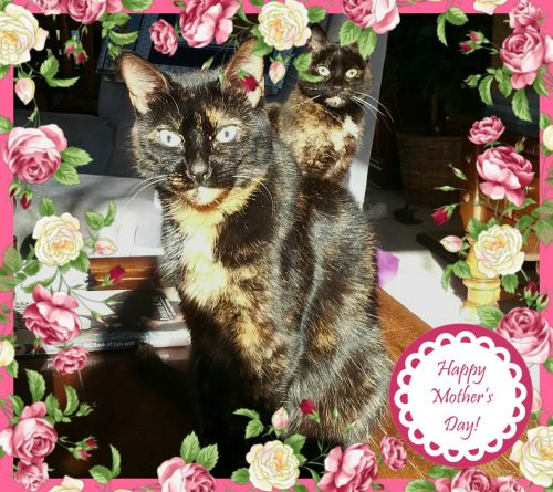 mothers-day-cats