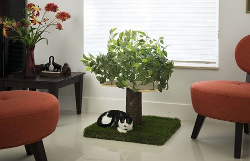 cat-haven-small