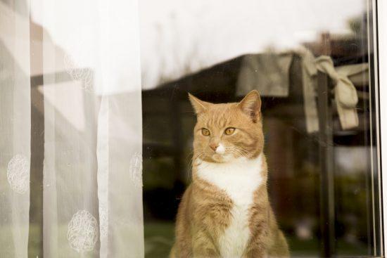 hiring-a-cat-sitter
