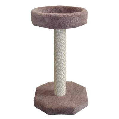 molly-and-friend-scratching-post-bed-on-top