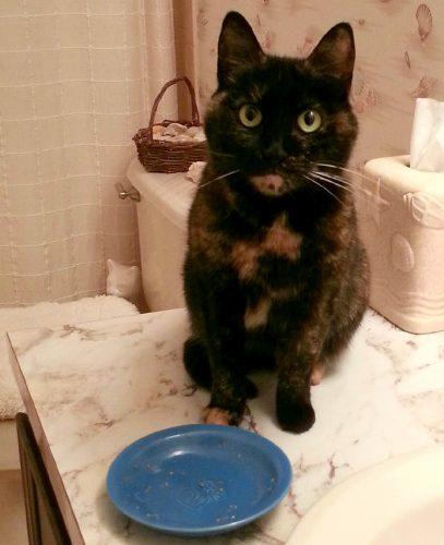 cat-emtpy-dish
