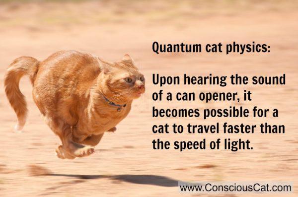 cat-running
