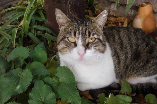 poisonous-plants-cats