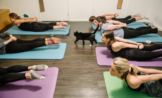 yoga-with-cats