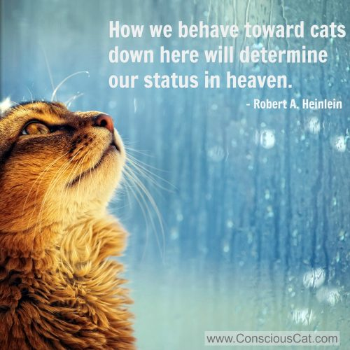behave-toward-cats