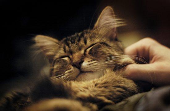 cat-purring