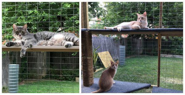outdoor-enclosure-cats