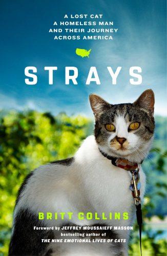 strays-britt-collins