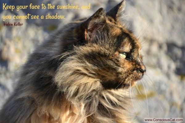 longhair-tortoiseshell-cat-sun