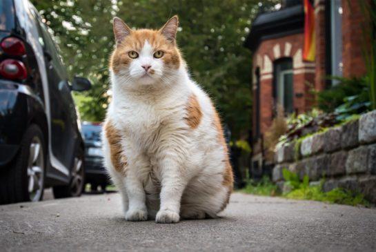 toronto-cat-themed-park-dizzy
