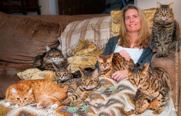 deborah-barnes-cats