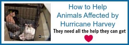 animal-rescue-harvey