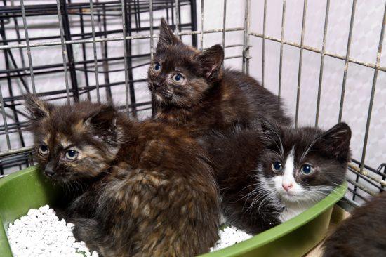 cat-rescue-hurricane-irma-harvey