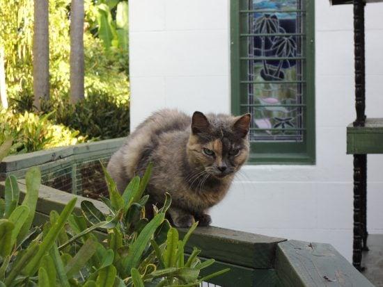 hemingway-house-cats