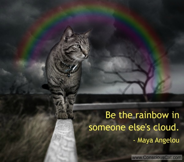 rainbow-cloud-cat