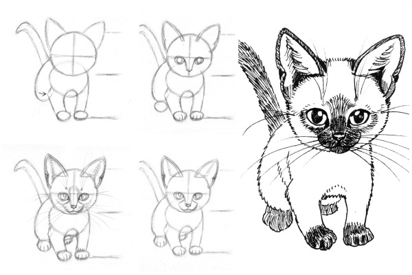 How to draw cats and kittens interior