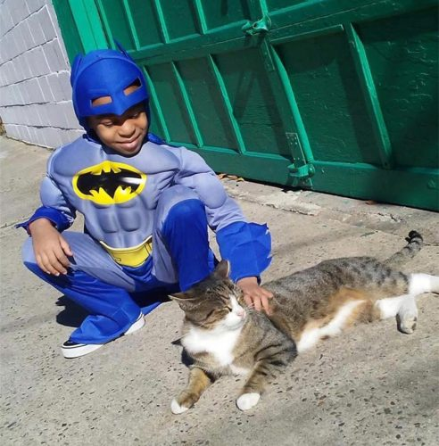 superhero-homeless-cats