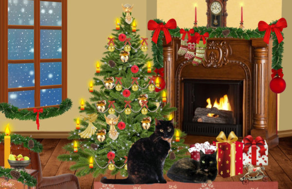 Image result for merry christmas cat images