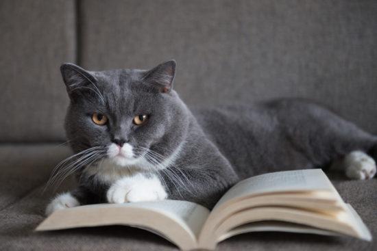 cat-book-reading