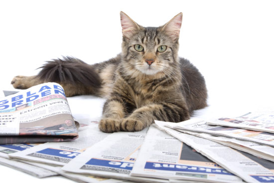 cat-newspaper