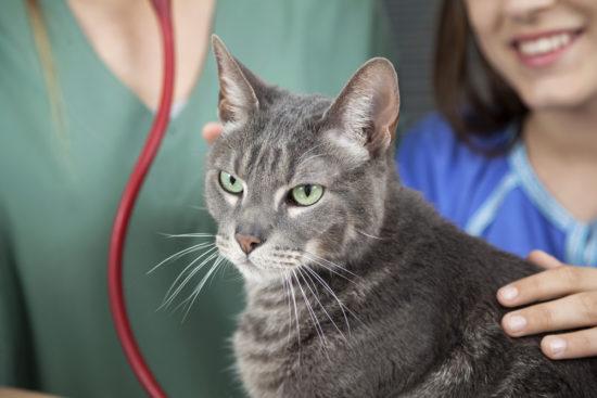 feline-health-cat-vet