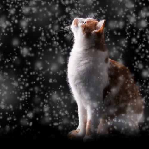 cat-snow