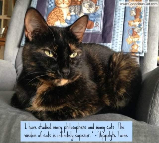 wisdom-of-cats