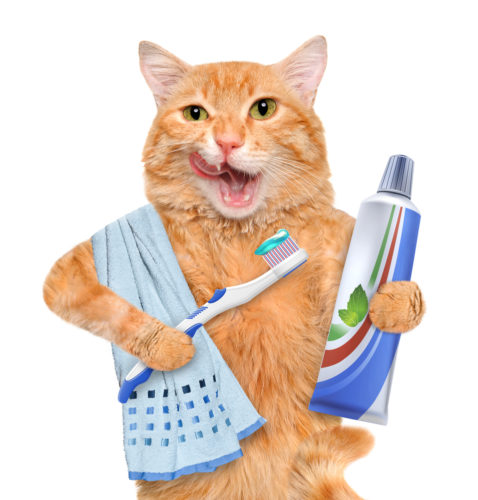 cat-with-toothbrush