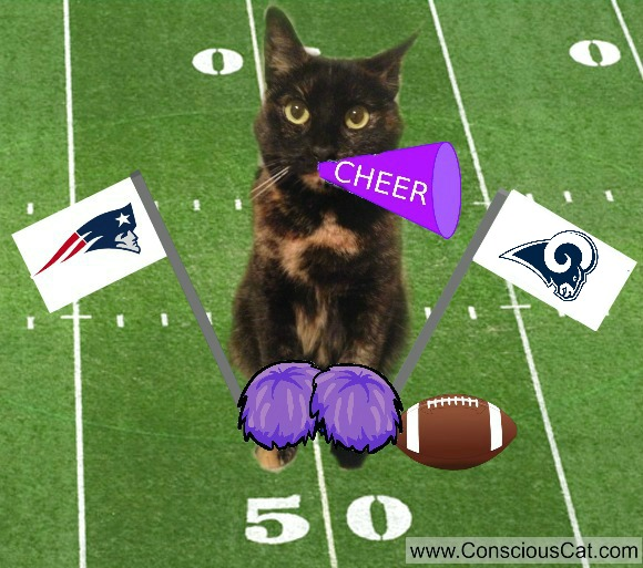 super-bowl-cat