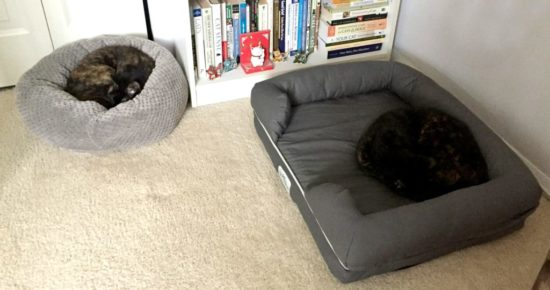 cats-in-beds
