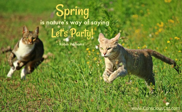 spring-cats