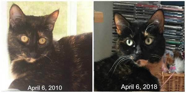 Allegra-8th-adoption-anniversary